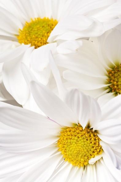 akacjowy-dwor-kwiaty-pakiet-ukojenie1